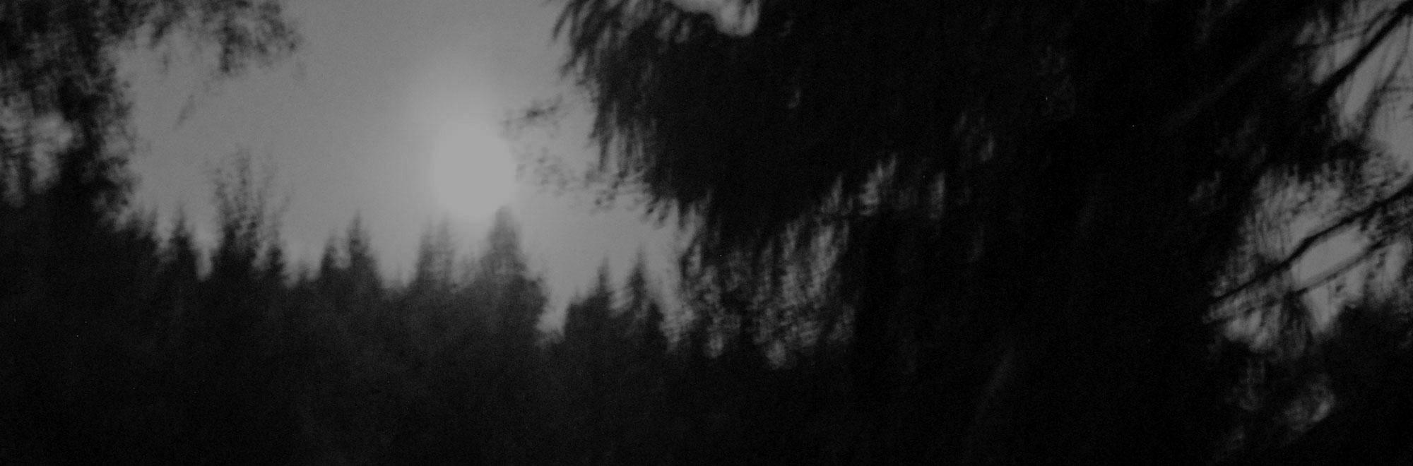 Geisterwald – Kunstaktion