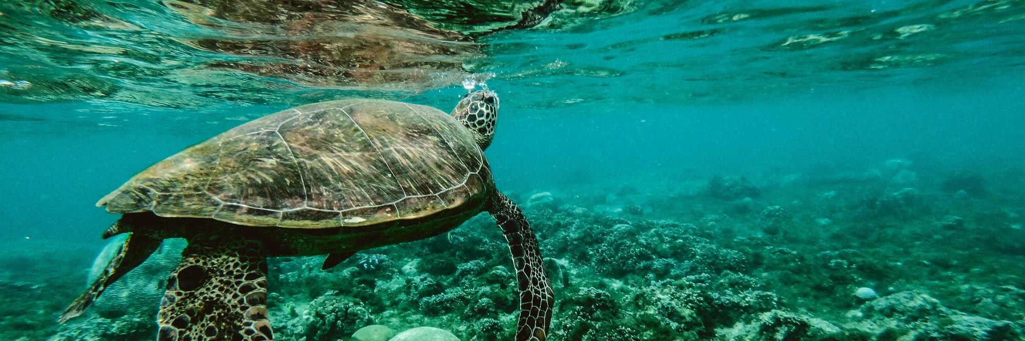 Unser Plastik verschmutzt unsere Meere