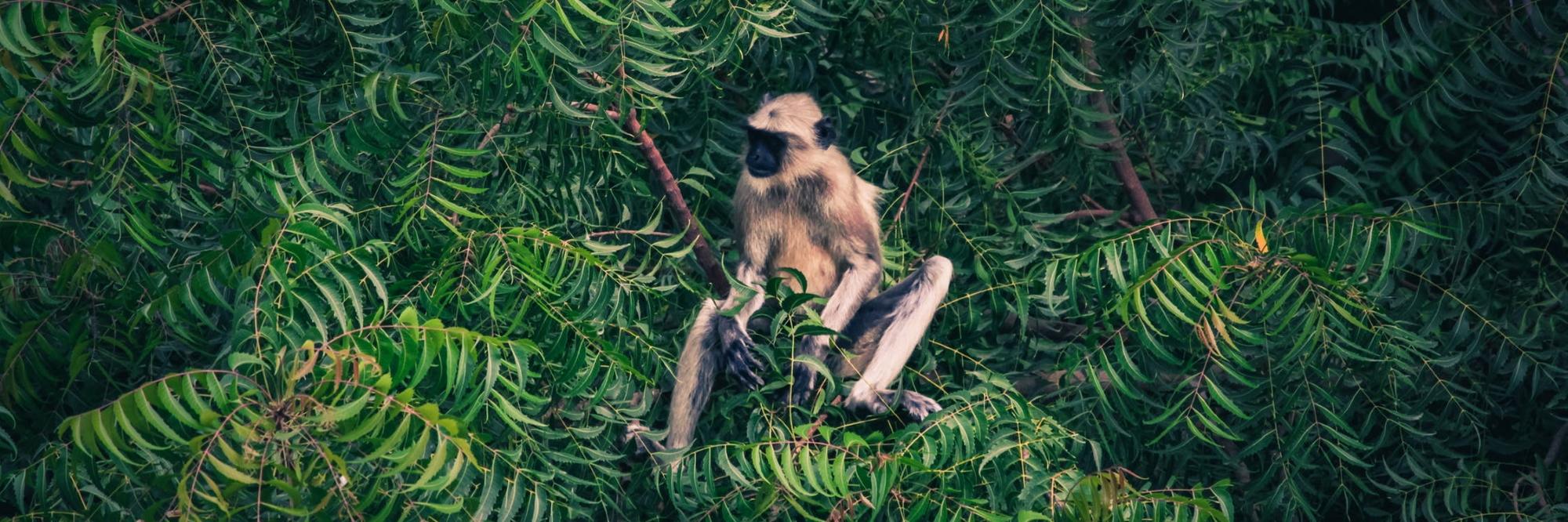 Das Artensterben – Eine unterschätzte Gefahr für die Menschheit?