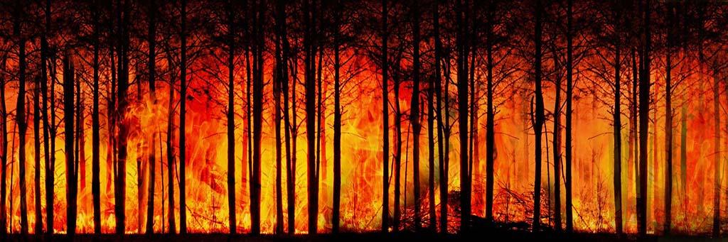 Es brennt! – Die Buschfeuer in Australien