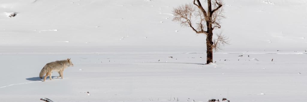 """""""Jeder Mensch ist ein Künstler.""""- 100 Jahre Jospeh Beuys"""
